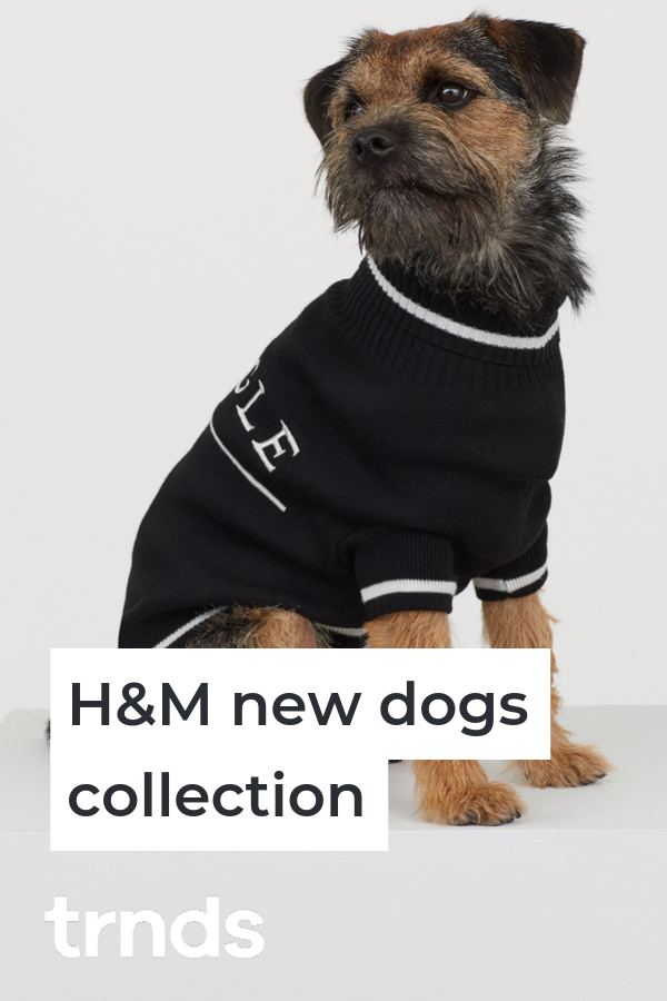 pringle-of-scotlant-H&M-dog-clothes-collection