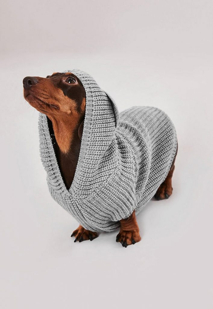 dog-wearing-a-missguided-dog-sweater