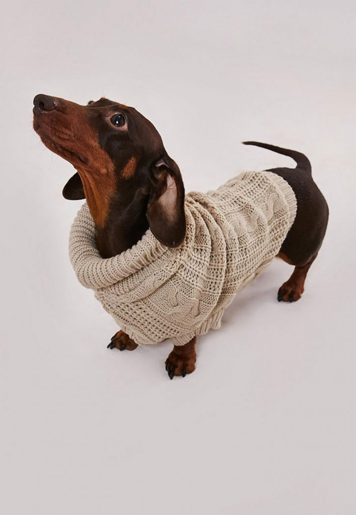 missguided-dog-sweaters