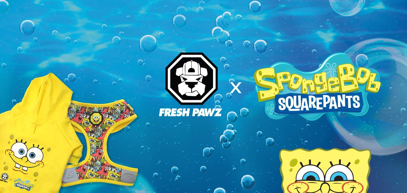 spongebob-fresh-pawz-dog