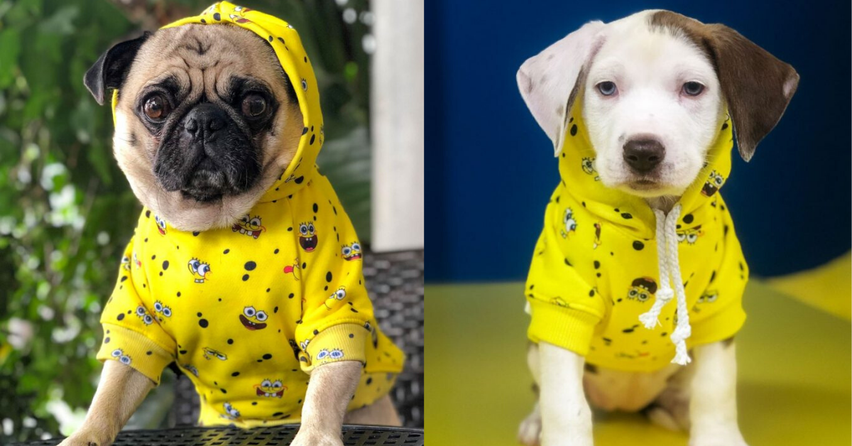 Spongebob-collection-of-dog-clothes