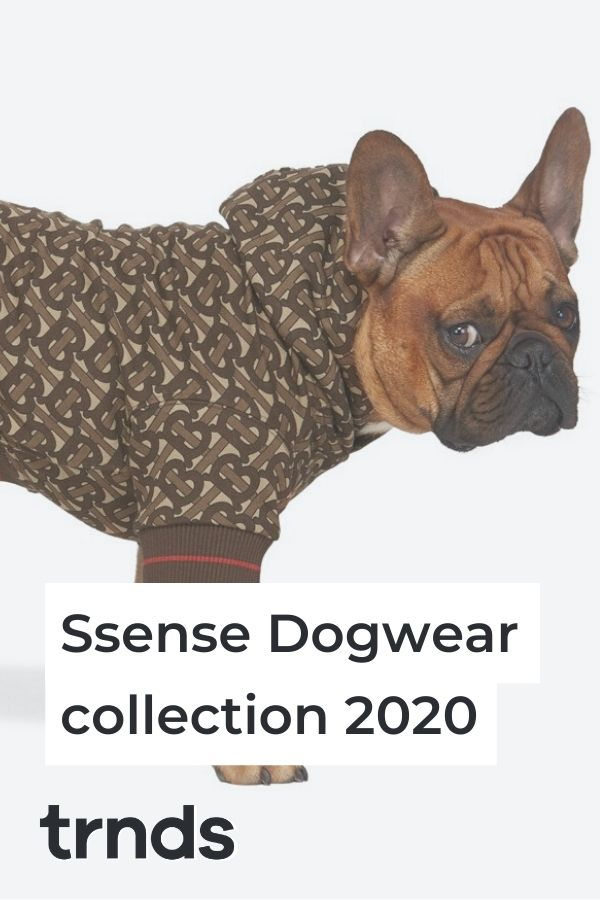 ssense-dog-collection-2020