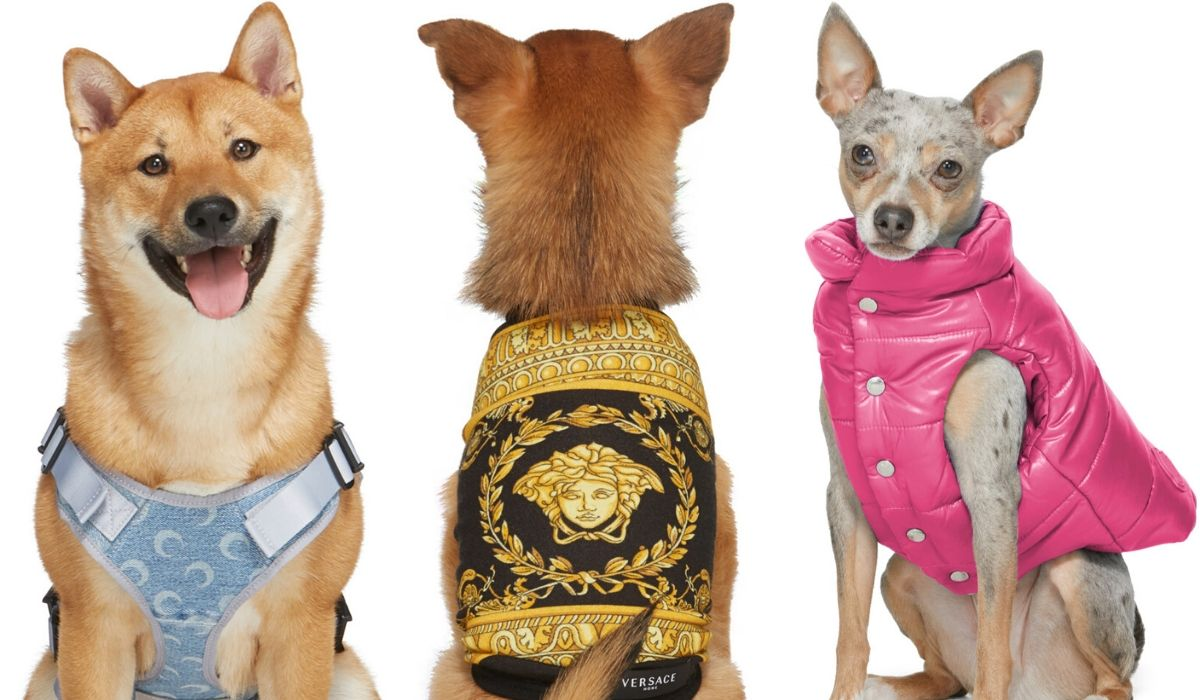 ssense-dogwear-collection-2020